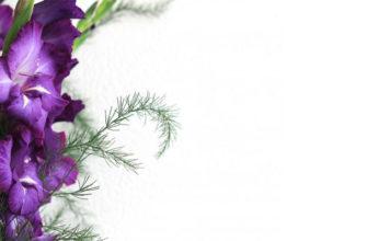 Гладиолус фиолетовый