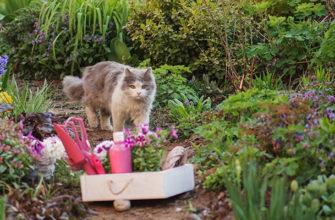 Травы для котов